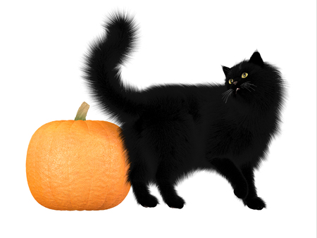 Halloween Black Cat and Pumpkin - The black cat and pumpkins are a symbol of autumn seasonal Halloween festivities  Stock Photo - 23905261