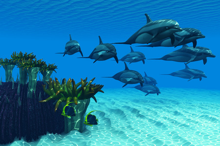 cetacean: Ocean Striped Dolphins - Two Pennant fish scamper away as a pod of Striped Dolphins race by a reef of anemones