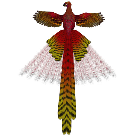 wildfowl: Phoenix Firebird - The Phoenix firebird is a mythical symbol of regeneration or renewal of life