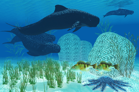 cetacean: Pilot Whales - Two Rockfish watch warily as a pod of Pilot whales swim past a coral reef and a Crown of Thorns starfish