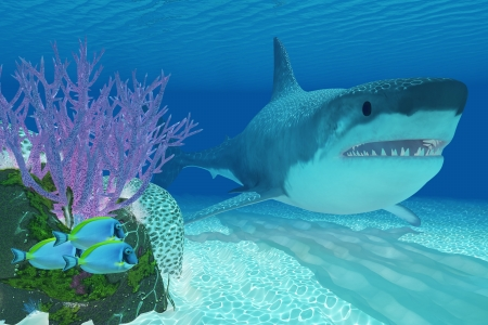 Prehistoric Megalodon Shark - A huge Megalodon shark swims next to a colorful coral reef in clear ocean waters Stock Photo - 23905266