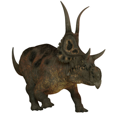 discovered: Diabloceratops on White - Diabloceratops is a newly discovered herbivore dinosaur from Utah  USA  and lived during the Cretaceous Period