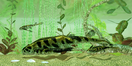 Bothropelpis River - Bothropelpis was a freshwater bottom feeder found in rivers and lakes in the Devonian Period