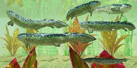 carboniferous: Carboniferous Rhizodus hibberti - Rhizodus hibberti is an extinct group of Carboniferous predatory lobe-finned fish