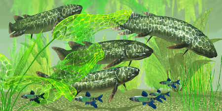 Dipterus macrolepidotus Fish - Dipterus is an extinct freshwater lungfish from the Devonian Period of Australia and Europe  Stock Photo