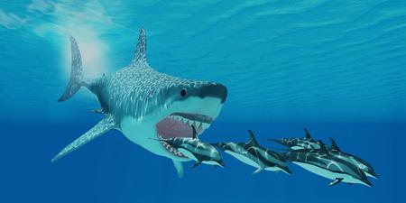 メガロドンの攻撃 - ストライプ イルカのポッドは、後に巨大なメガロドンのサメ泳ぐ 写真素材