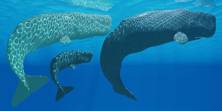 male sperm: Sperm Whales - A mother Sperm whale with calf is visited by an interested male