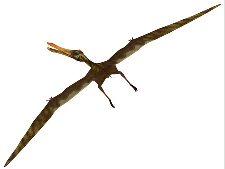 Anhanguera Flight on White - Anhanguera was a fish-eating pterosaur from the Cretaceous era of Brazil  photo