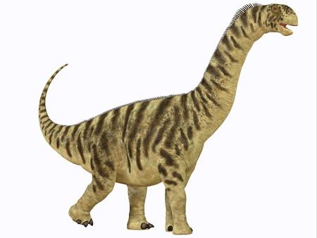 sauropod: Camarasaurus juvenil - Camarasaurus era un dinosaurio saur�podo que vivi� en Am�rica del Norte en la Era Jur�sica