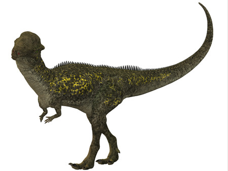 Stegoceras Profile - Stegoceras was a herbivore dinosaur that lived in the Cretaceous Period of North America