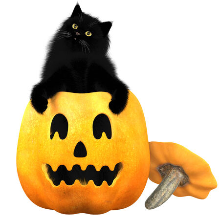 molly: Black Cat and Halloween Pumpkin