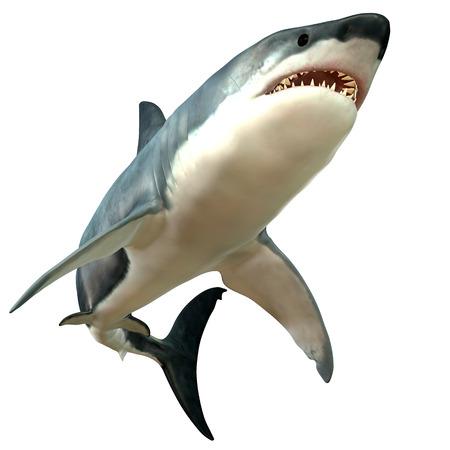偉大な白いサメの体 写真素材