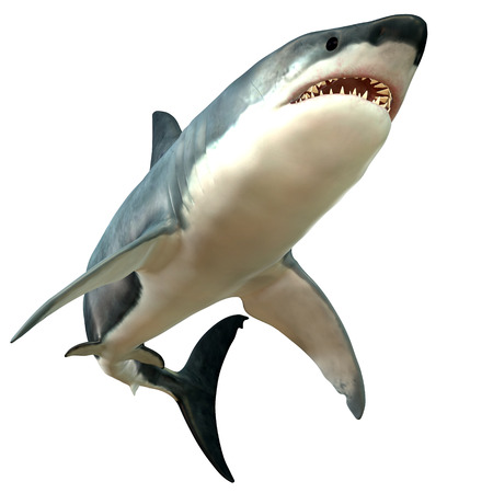 Great White Shark Body  photo