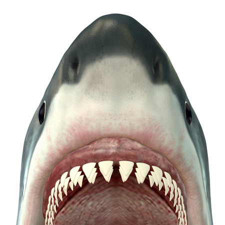 jaw: Great White Shark Jaws Stock Photo
