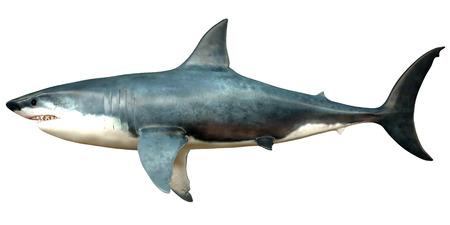 swimming animal: Megalodon Side Profile