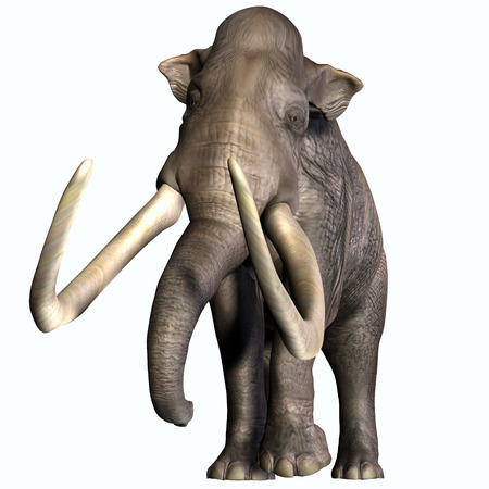 middle america: Columbian Mammoth Front Profile - The Columbian Mammoth lived during the Quaternary Period of North and Middle America  Stock Photo