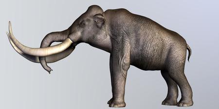 columbian: Columbian Mammoth Side Profile  Stock Photo