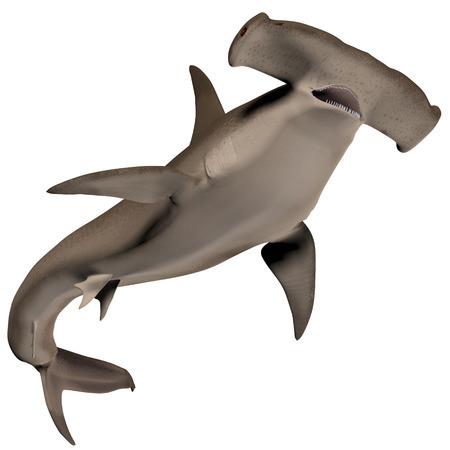 Hammerhead Shark Body  photo