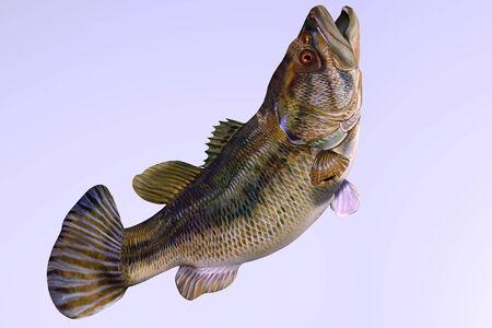 largemouth bass: Bocazas costado Perfil - El bajo bocazas es una pesca deportiva que habita en lagos de agua dulce, arroyos y estanques