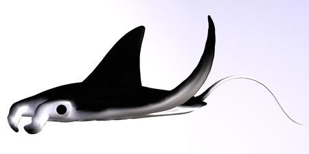 plancton: El Manta Ray es un filtrador de comer grandes cantidades de plancton