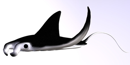 quantities: The Manta Ray is a filter feeder eating large quantities of plankton  Stock Photo