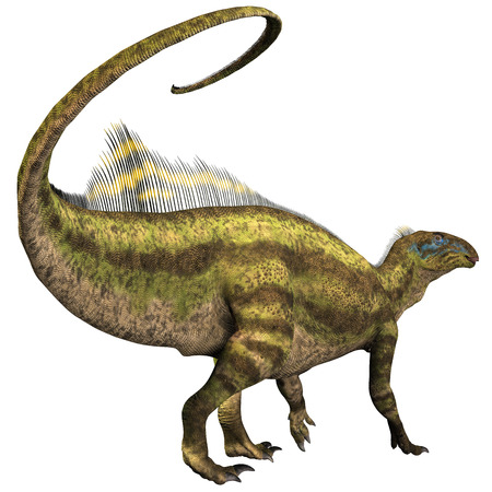 Tenontosaurus was an ornithopod herbivorous dinosaur that lived during the Cretaceous Period of North America  Banco de Imagens