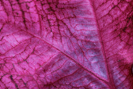 adds: Coleus Leaf - Coleus is an annual colorful foliage plant that adds vivid colors to the garden