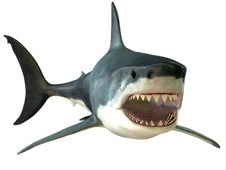 continuously: Great White Shark Mouth - The Great White Shark is an apex-predator and has several sets of teeth which replace themselves continuously