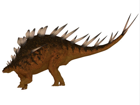 herbivorous: Kentrosaurus Side Profile - The Kentrosaurus dinosaur from the Jurassic Period of North America has plates along its spine and spikes on its shoulders and tail