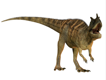 found: Ceratosaurus on White - The Ceratosaurus is a horned theropod dinosaur found in North America from the Jurassic Period