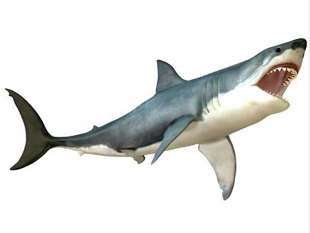 偉大な白いサメの攻撃 - 偉大な白いサメ apex プレデターであり、世界中で発見 写真素材