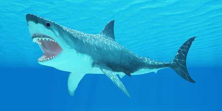 white shark: Great White Shark Underwater