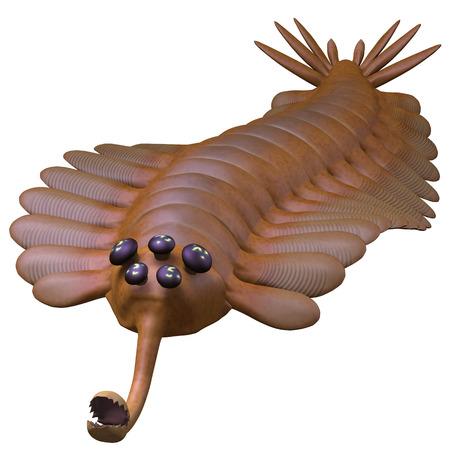 proboscis: Cambrian Opabinia - Opabinia is a small predator of Cambrian seas and hunted worms and soft bodied prey with its proboscis.