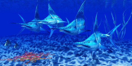 billfish: Blue Marlin Predators - The Blue Marlin is a predator and a favorite game fish of deep sea anglers.