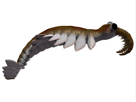 Cambrian Anomalocaris Side Profile - Anomalocaris is the largest known predator of Cambrian seas and hunted smaller arthropods of that time. Stock Photo