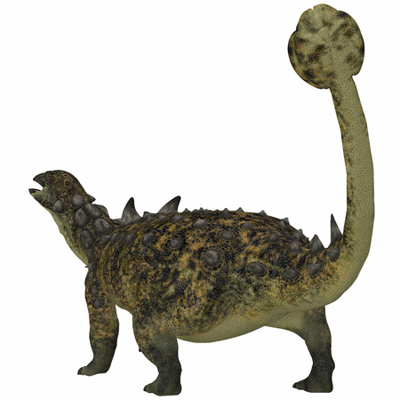 Euoplocephalus Dinosaur Tail - Herbivorous Euoplocephalus had a body full of armor and used its long tail and club for defense.