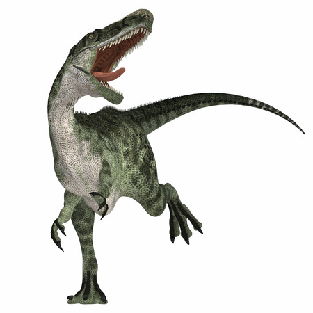 age related: Monolophosaurus on White - Monolophosaurus was a carnosaur predator of the Jurassic Age of China and is related to allosaurs. Stock Photo