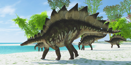 stegosaurus: Stegosaurus Lake - A herd of Stegosaurus dinosaurs head down to a lake for a drink in the Jurassic Age. Stock Photo