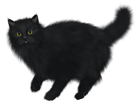 molly: Black Cat Walking - A black cat is one of the spiritual symbols of Halloween.