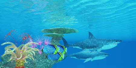 carcharodon: Great White Shark Reef - Three Black-backed Butterflyfish swim toward the shelter of a reef to hide from two Great White sharks.