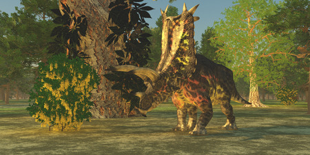 Pentaceratops Dinosaur - A Pentaceratops dinosaur ambles among forest trees in the Cretaceous Era. photo