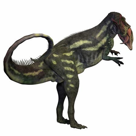 fragilis: Allosaurus over White - Allosaurus was a carnivorous theropod dinosaur in the Late Jurassic Period of North America.