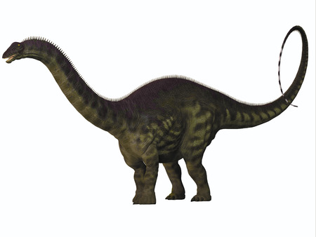 behemoth: Apatosaurus on White - Apatosaurus also called Brontosaurus is a sauropod dinosaur of Western North America during the Jurassic Era.