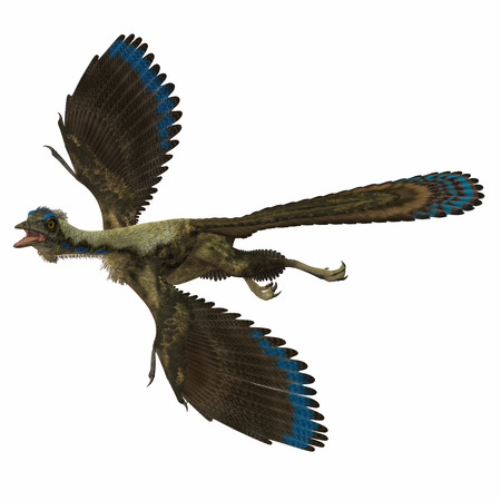 Archaeopteryx over White - Archaeopteryx is the most primitive known bird and lived in the Jurassic Age of Germany. photo
