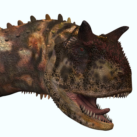 carnivorous: Carnotaurus Head - Carnotaurus was a theropod carnivorous dinosaur that lived in Argentina in the Cretaceous Period.