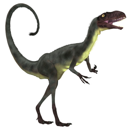 Dilong Dinosaur over White - Dilong was a small carnivorous theropod dinosaur the lived in the Lower Cretaceous Era of China.