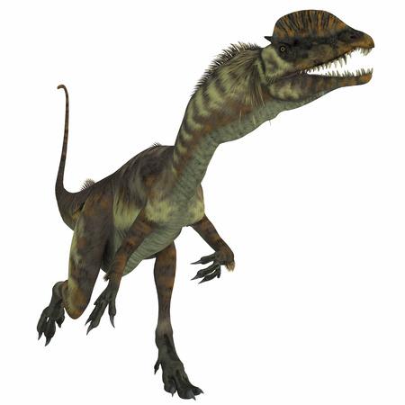 白、ケラトサウルス ケラトサウ...