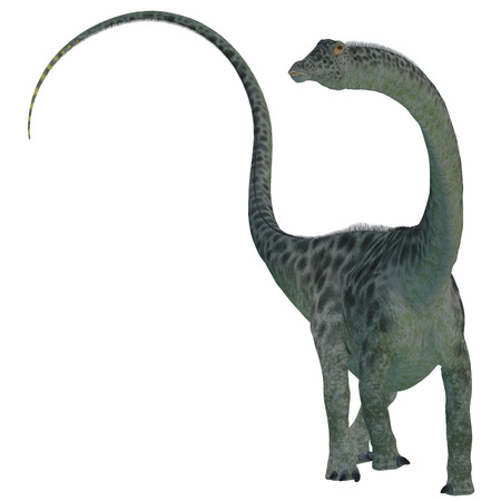 sauropod: Diplodocus Dinosaur on White - Diplodocus was a sauropod herbivorous dinosaur that lived in the Jurassic Era of North America. Stock Photo