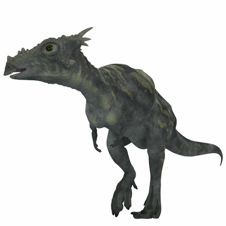 Dracorex Dinosaur over White - Dracorex was a herbivorous dinosaur and lived in the Cretaceous Period of North America.