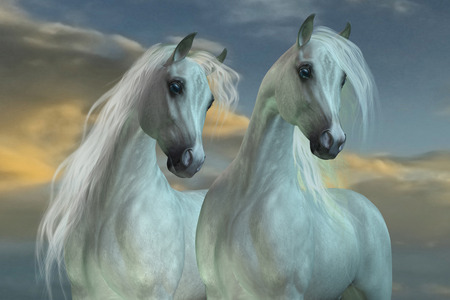 developed: Arabian Brothers - The Arabian horse breed was developed in the deserts of the Arabian Peninsula. Stock Photo